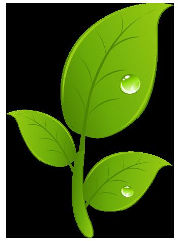Blaetter_Nachhaltigkeit